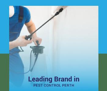 leading brand in pest control perth